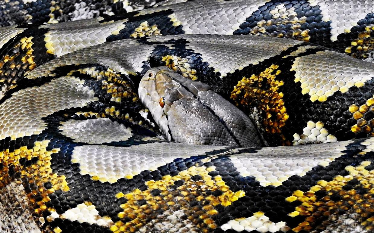 Running Your First Python Script - DZone Big Data