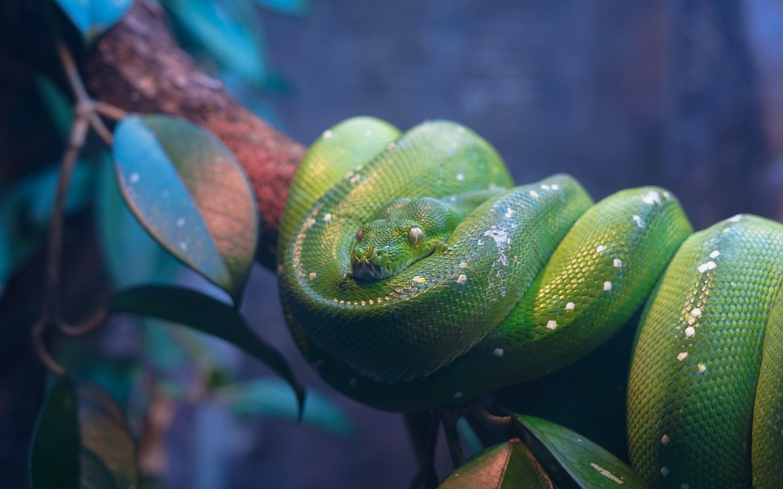 Best of DZone: Python - RapidAPI