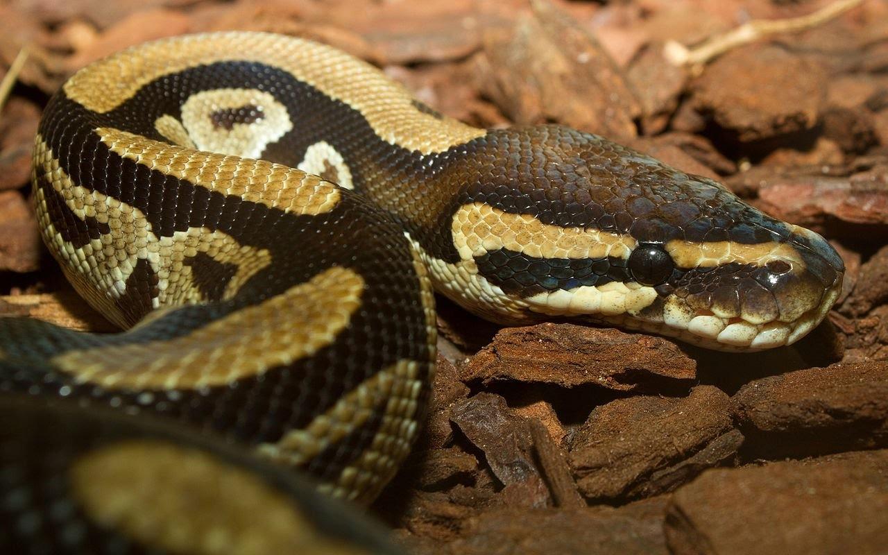Python 3 Testing: An Intro to unittest - DZone DevOps