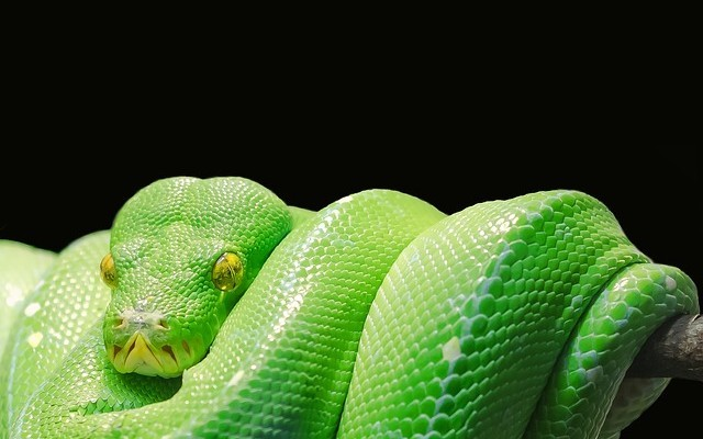 The Key Differences Between Python 2 and Python 3 - DZone Performance