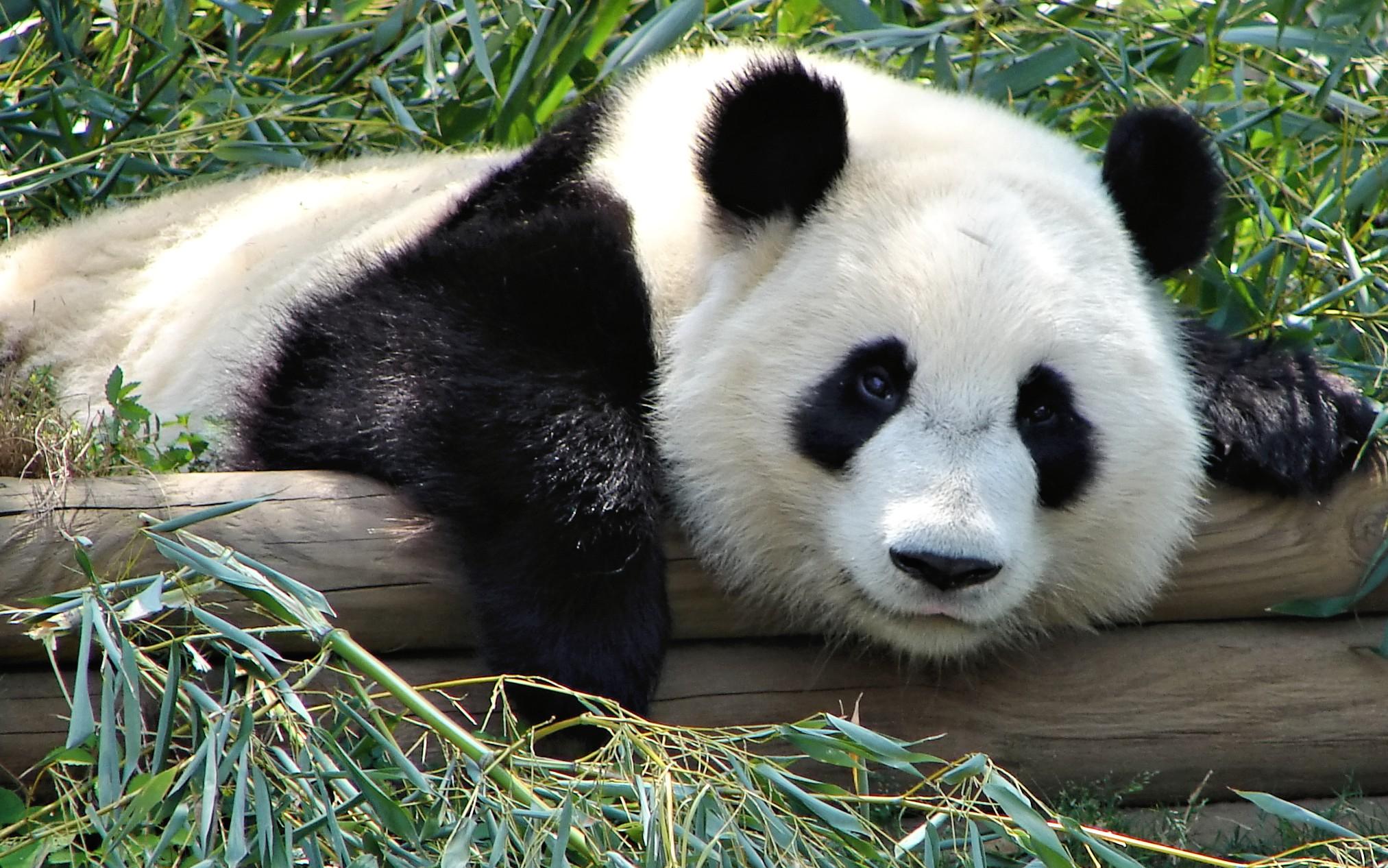 Python Pandas Tutorial: Series Methods - DZone Big Data