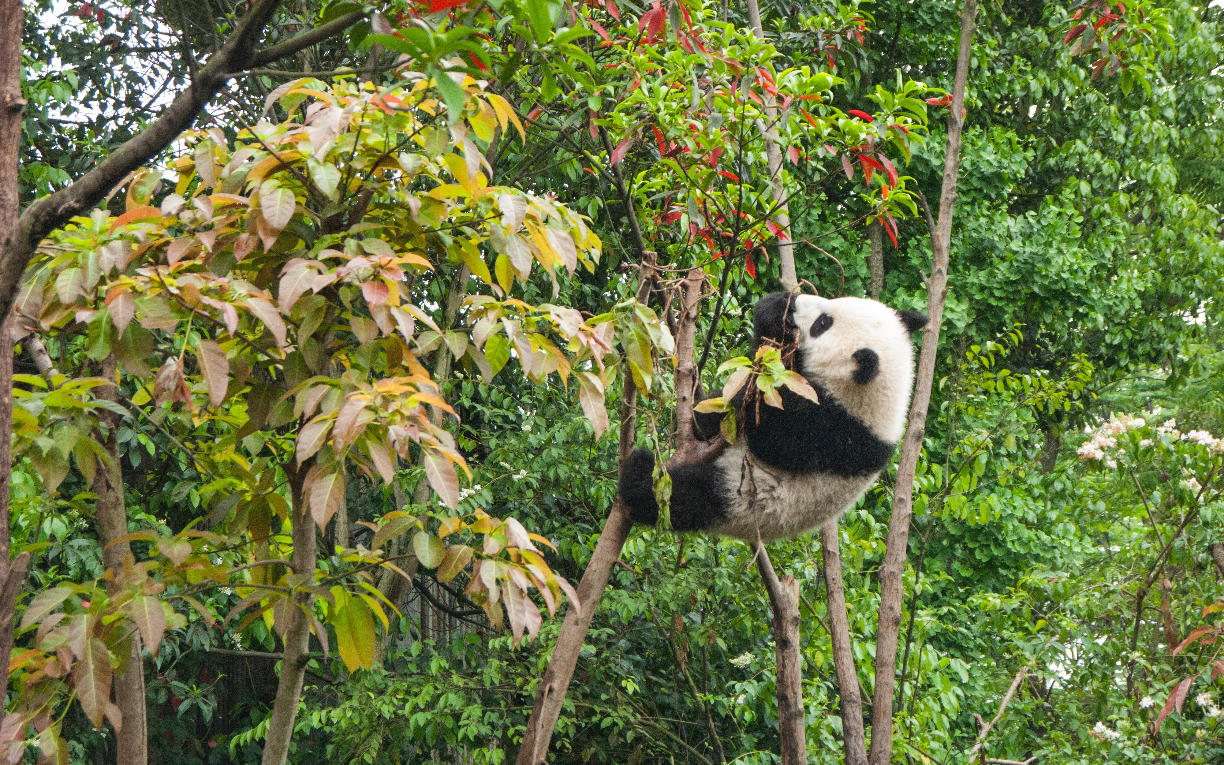 Dates in Pandas Cheatsheet - DZone Big Data
