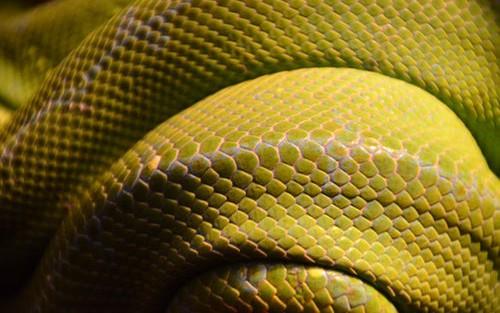 Python ODBC Custom API - DZone Database