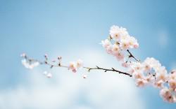 Spring Tips: Reactive Web Views [Video]