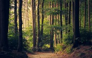 A Comprehensive Guide to Random Forest in R