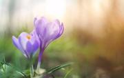 Spring Batch — Read From XML