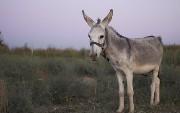 Mule Maven Plugin for Deploying MuleSoft Applications