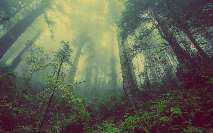 3 Reasons to Use a Random Forest Over a Neural Network