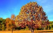 Angular Tree Table