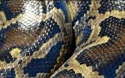 Types of Matplotlib in Python