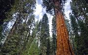 Hyperlambda, Living Tree Structures