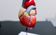 AI in Medical Outcomes With Cardiology
