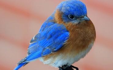 18 DevOps Leaders to Follow on Twitter