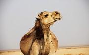 Basic Camel and HTTPS