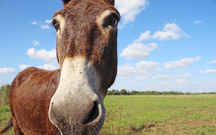 Data Security With Mule ESB [Video]