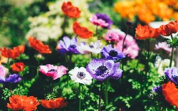 Build a REST Web Service Using Spring
